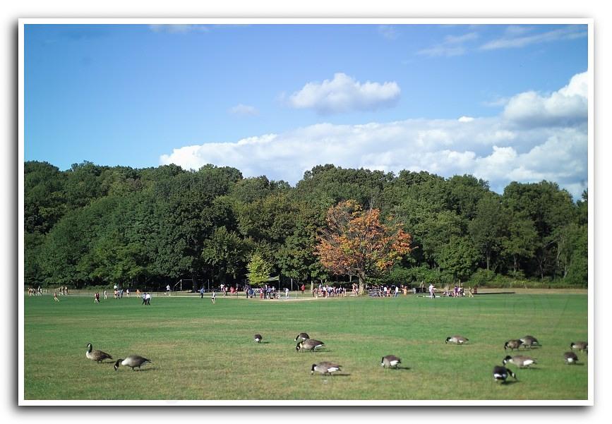 纽约州的秋天如诗如画 - hubao.an - hubao.an的博客