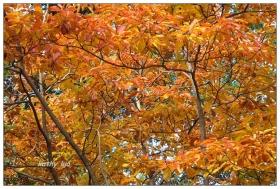【小虫摄影】红叶和小虫