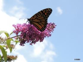 【影濃攝影】隨著蝴蝶飛舞
