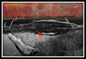 【攝影蟲】新澤西州楓葉紅
