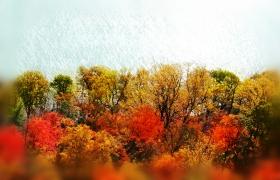 「Bear mountain」壮观的枫林!