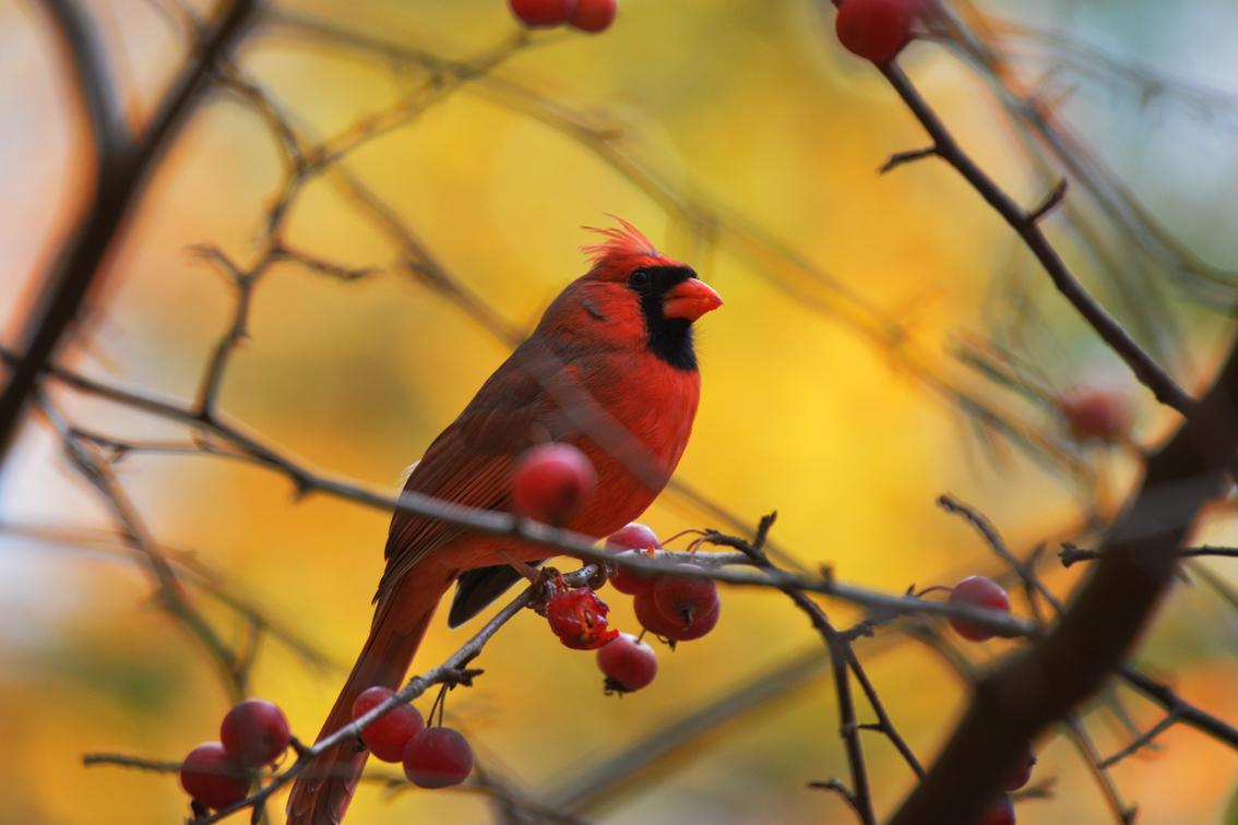 走-拍  纽约中央公园打鸟_图1-5