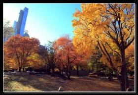 漫步踏秋行-中央公园(一)