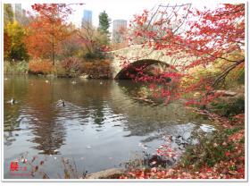 秋高气爽的中央公园