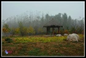 青州弥河湿地