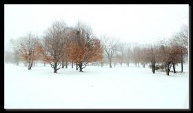 雪天可乐娜公园