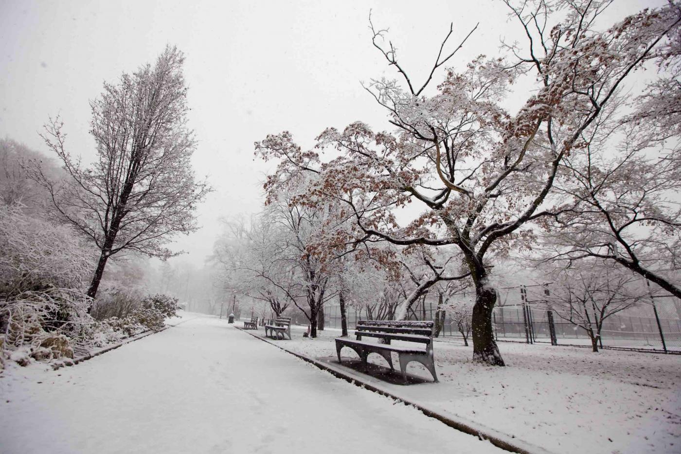 雪中即景_图1-1