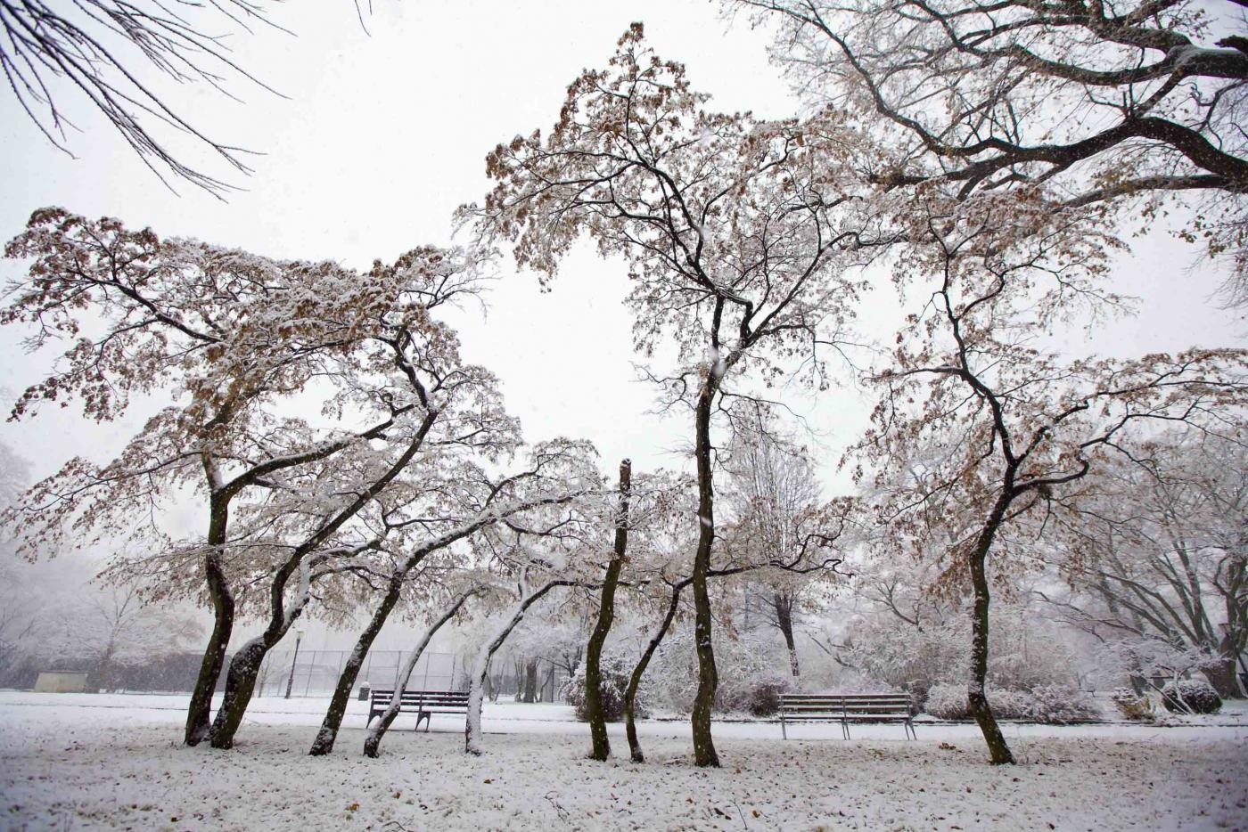 雪中即景_图1-3