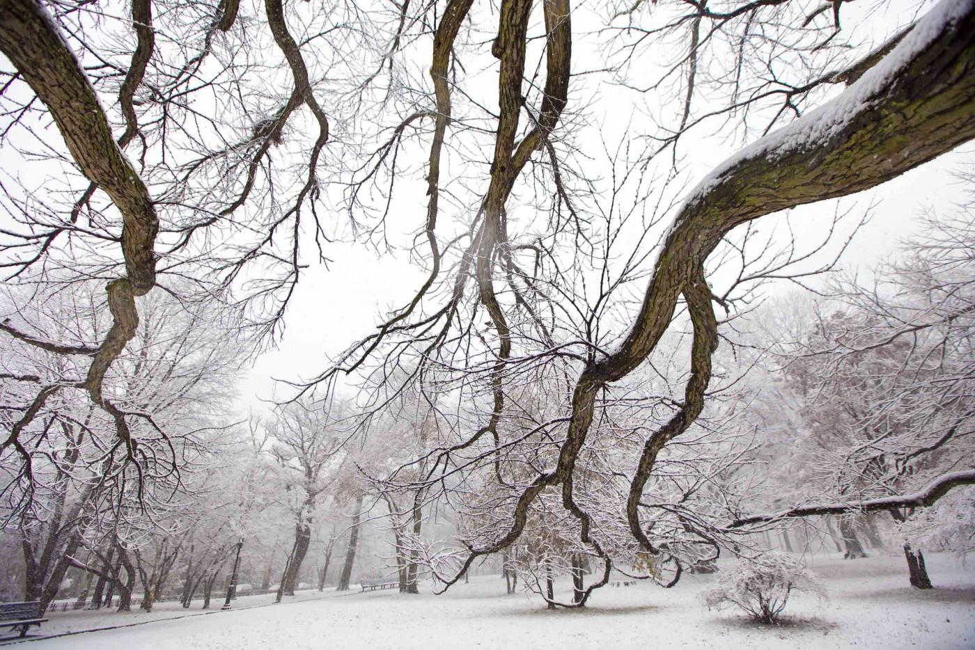 雪中即景_图1-4