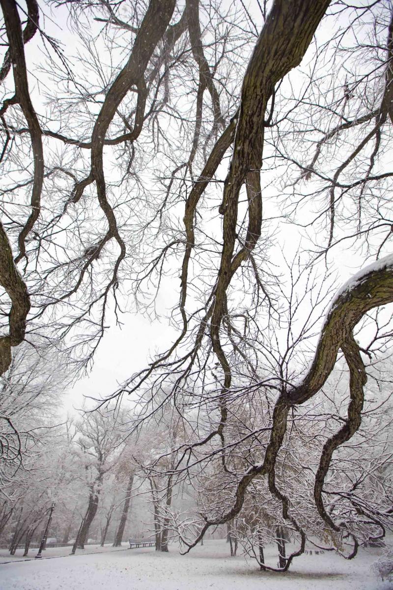 雪中即景_图1-14