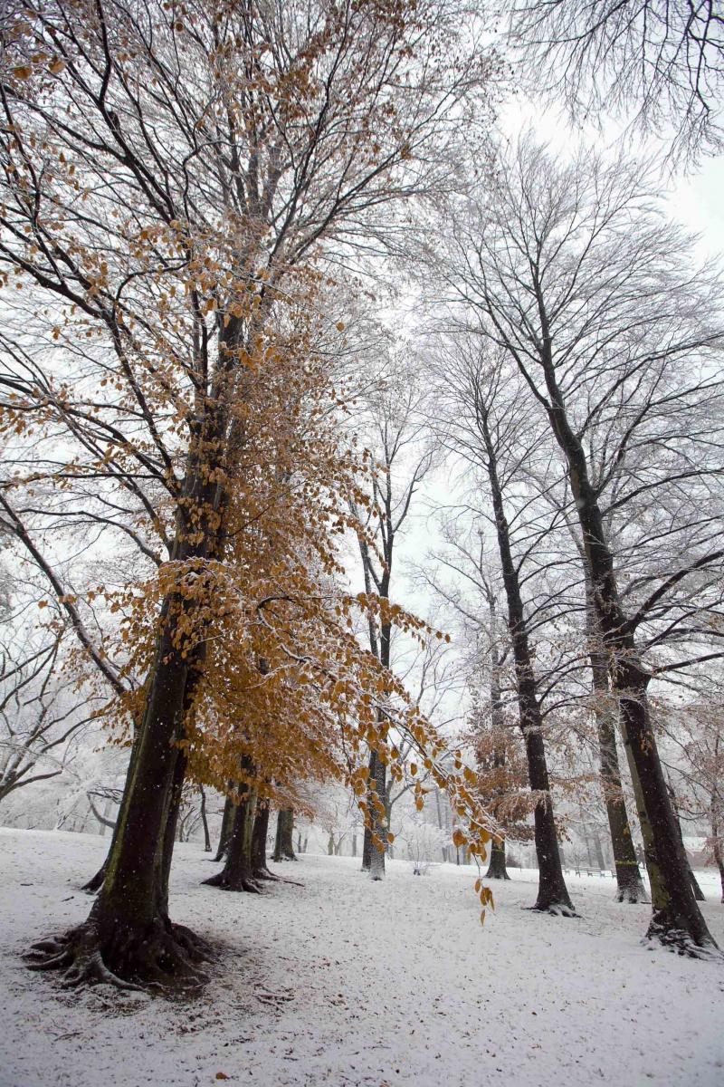 雪中即景_图1-15