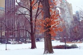 Central Park 野鸭冰川戏水!