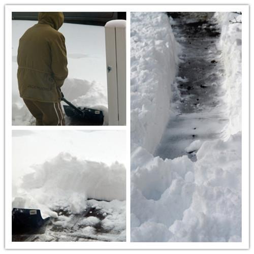 各扫门前雪_图1-3