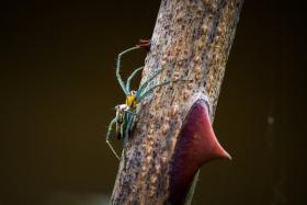【自由鸟】微距拍蜘蛛,其实它们也有美的一