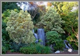洛杉矶植物园内的小瀑布、小池塘、小湖和小