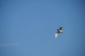 鷗学鷹姿傲兰天,只因風送春消息