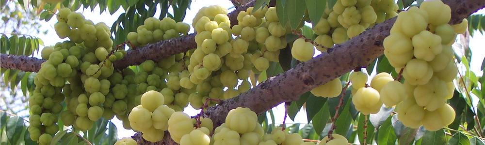 奇怪的水果,吃过吗?_图1-17