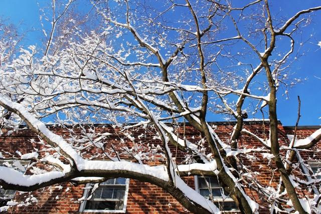 2014 雪景_图1-2