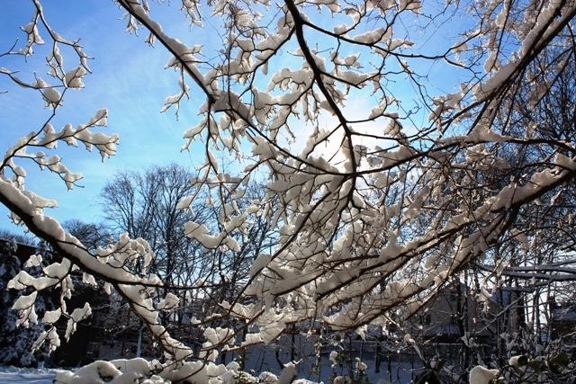 2014 雪景_图1-4