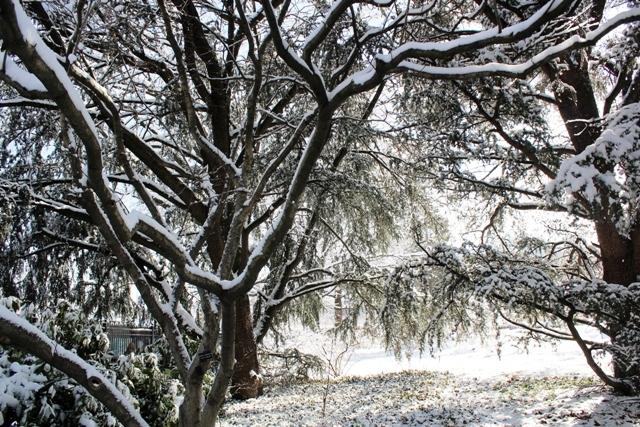 2014 雪景_图1-9