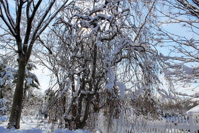 2014 雪景_图1-11