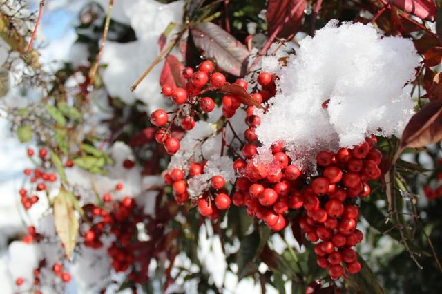 2014 雪景_图1-12