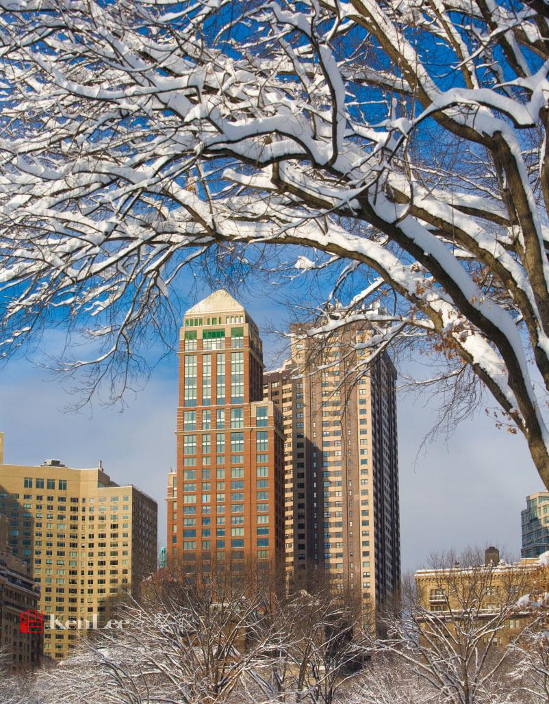 雪后美丽的树挂_图1-1