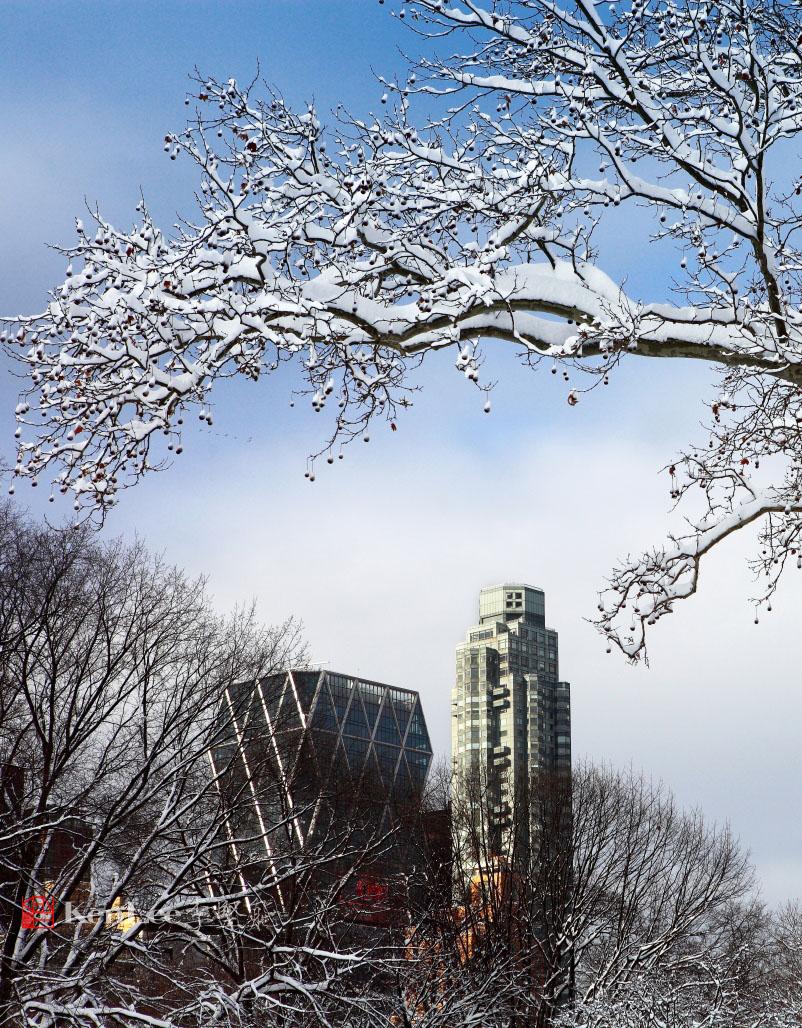 雪后美丽的树挂_图1-2