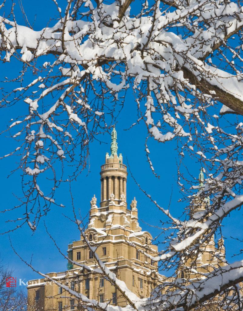 雪后美丽的树挂_图1-3