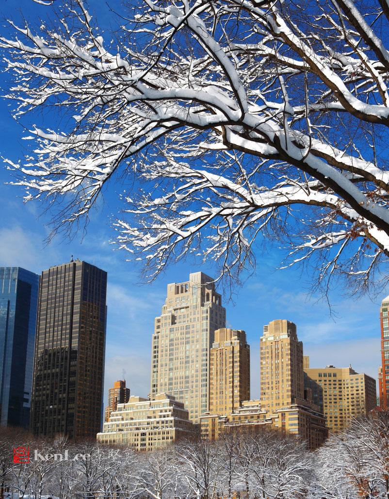 雪后美丽的树挂_图1-4