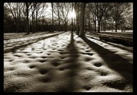走-拍  公园雪景