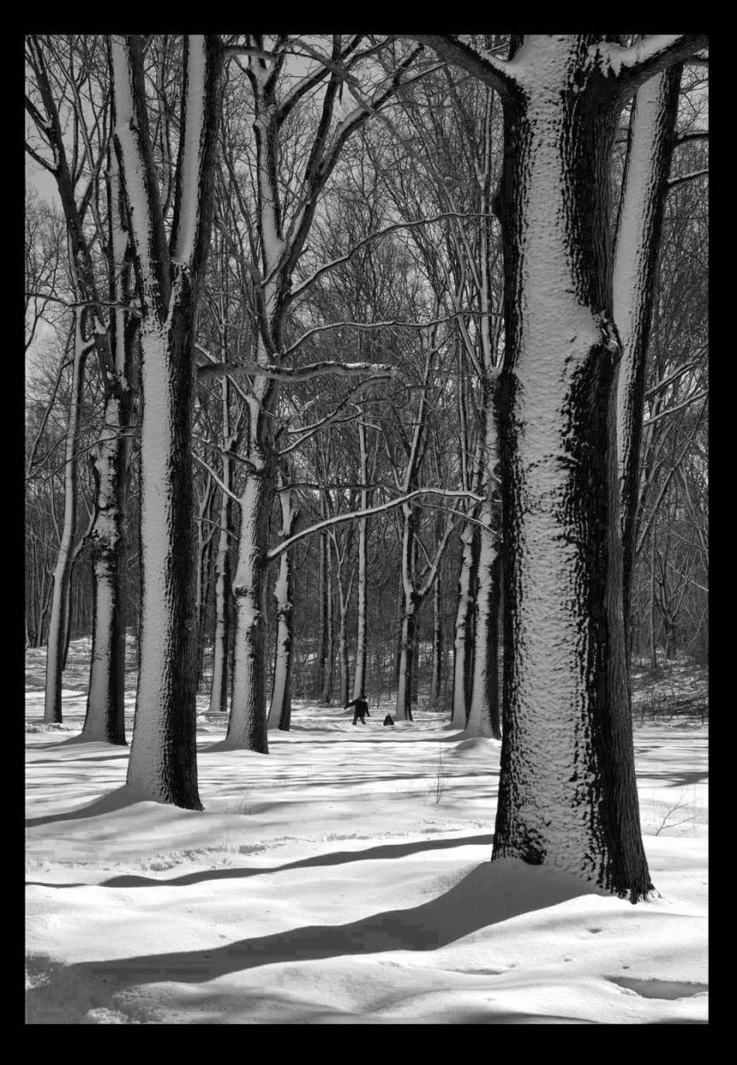 走-拍  公园雪景_图1-2