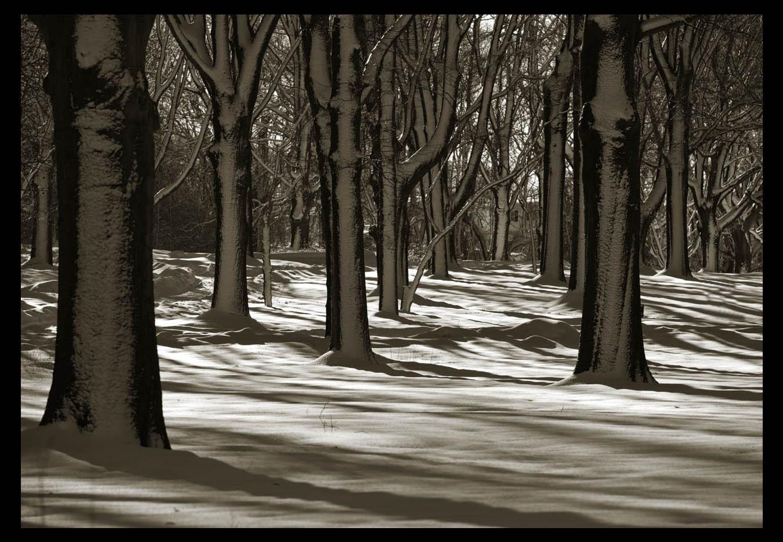 走-拍  公园雪景_图1-3