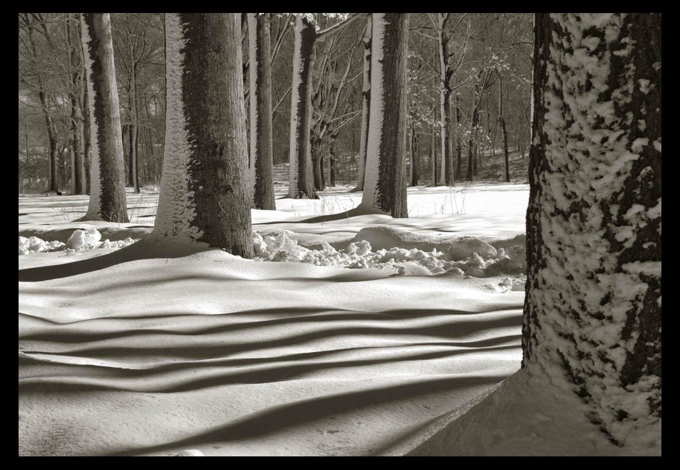 走-拍  公园雪景_图1-7