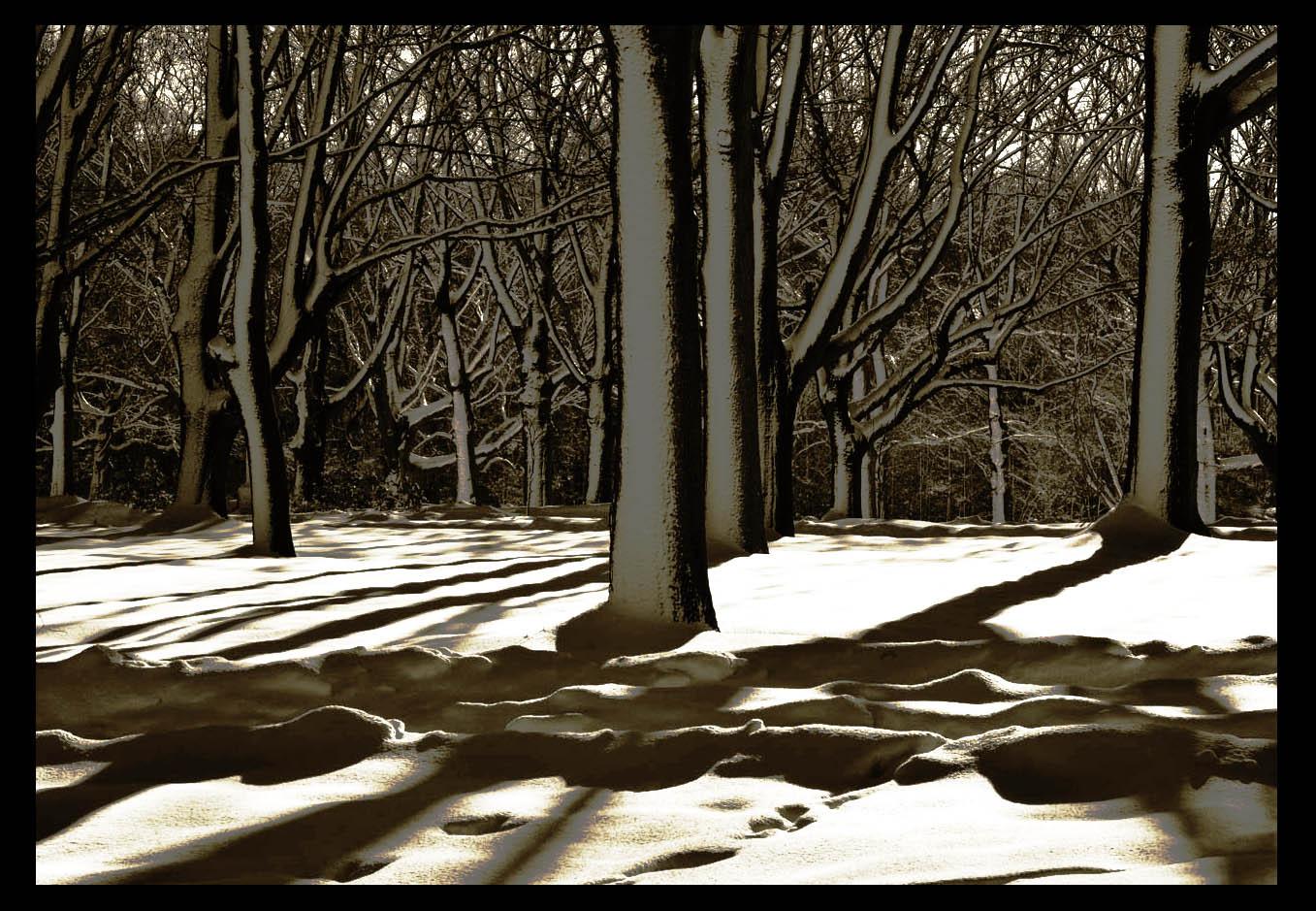 走-拍  公园雪景_图1-8