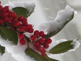 风雪中的植物
