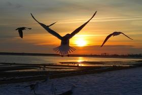 「Jamaica Bay」的清晨~海鸥飞处彩云飞!