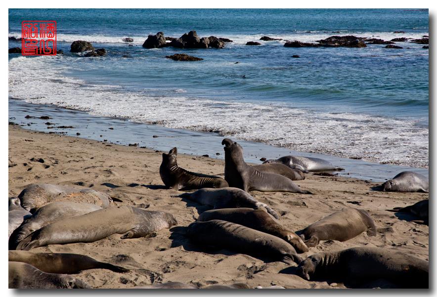 《酒一船》:大苏尔(Big Sur) - 加州最美的海岸线_图2-18