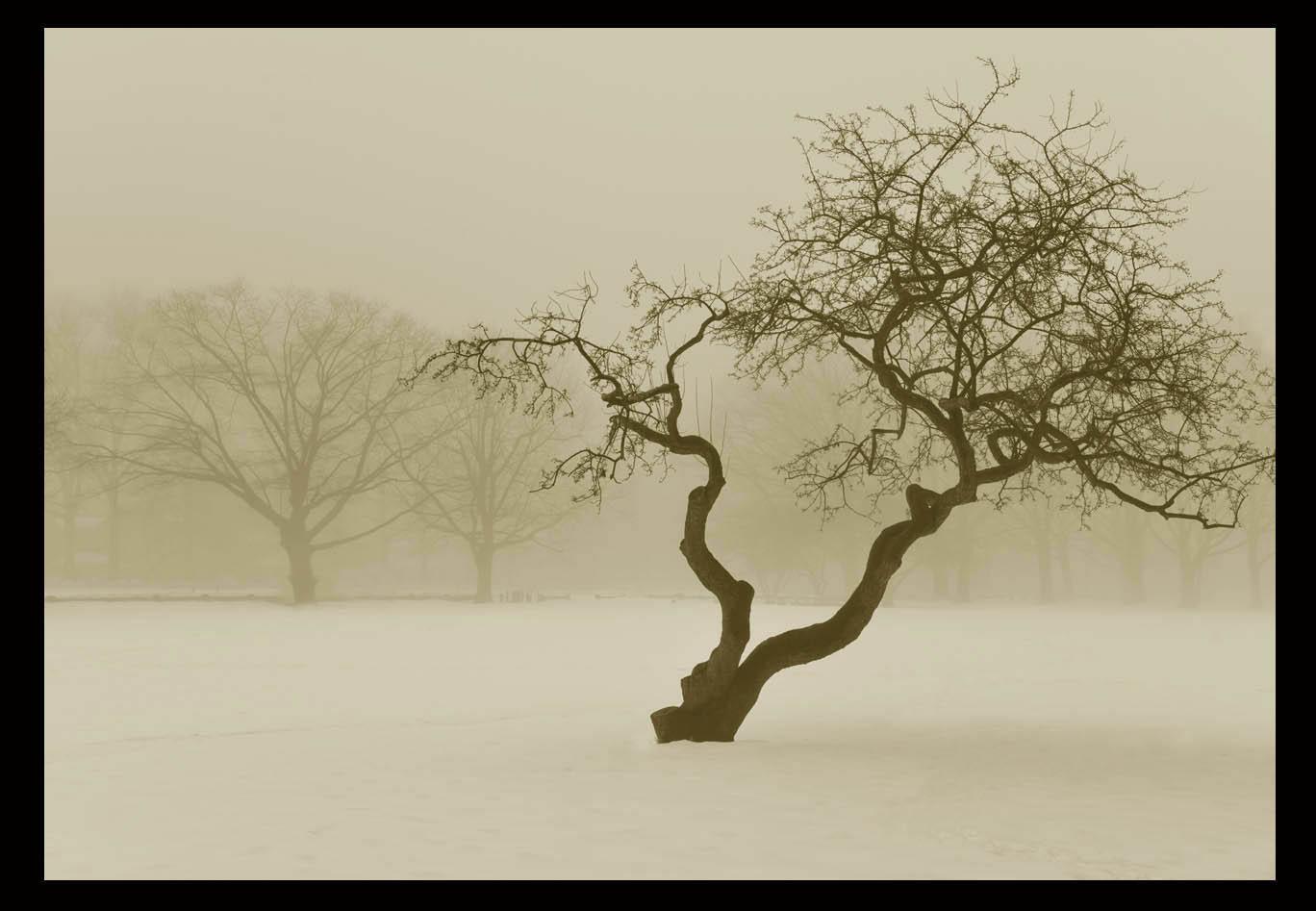 走-拍  今天早晨的雾景。_图1-1