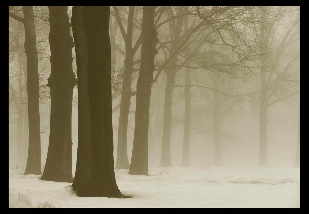 走-拍  今天早晨的雾景。_图1-3