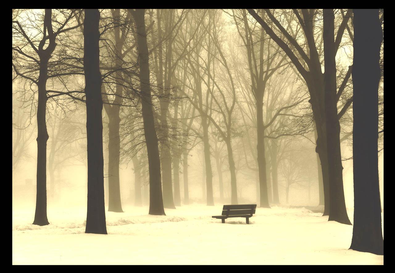 走-拍  今天早晨的雾景。_图1-4