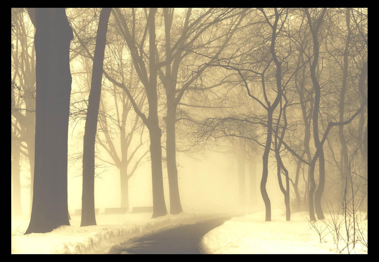 走-拍  今天早晨的雾景。_图1-6