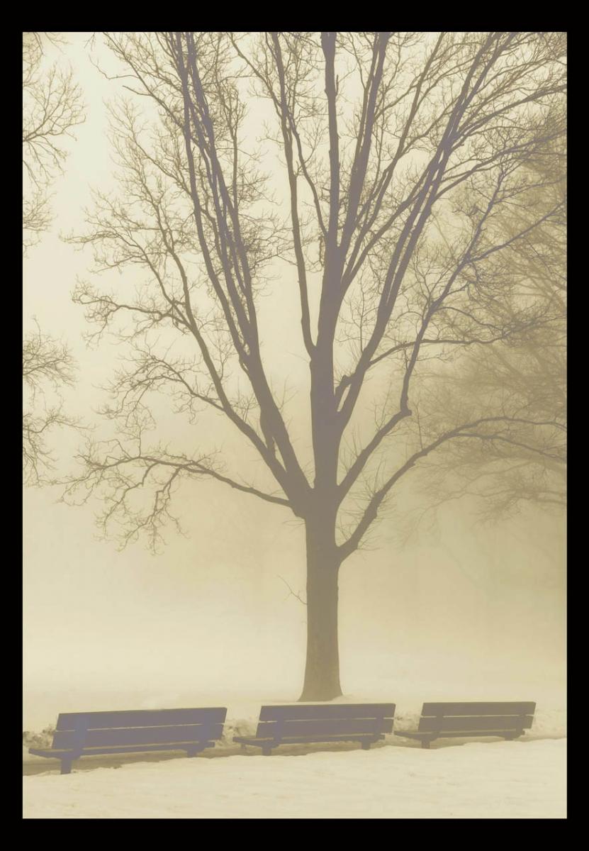 走-拍  今天早晨的雾景。_图1-8