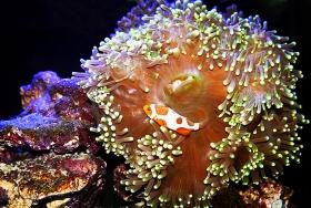 水族馆随拍~珊瑚水母与鱼虾!