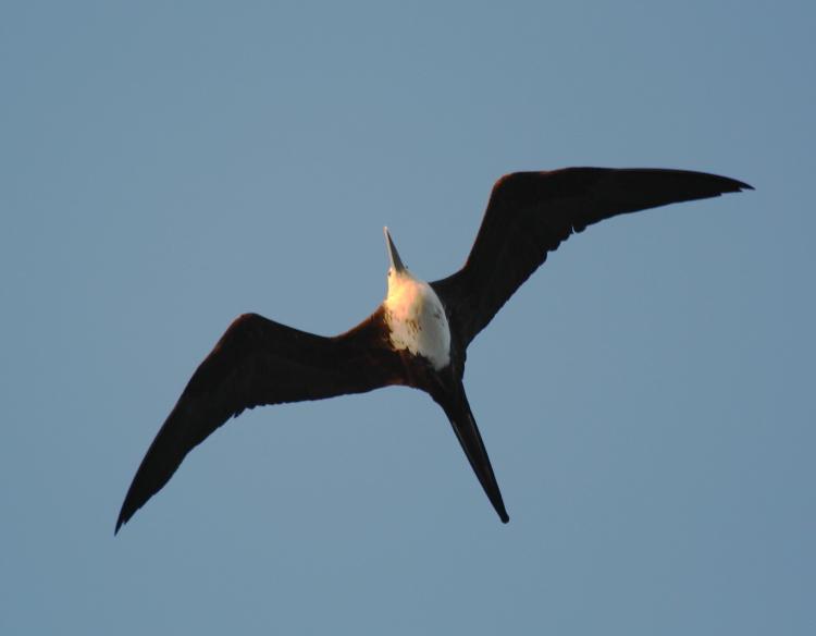 加勒比海上空的海鸥_图1-1