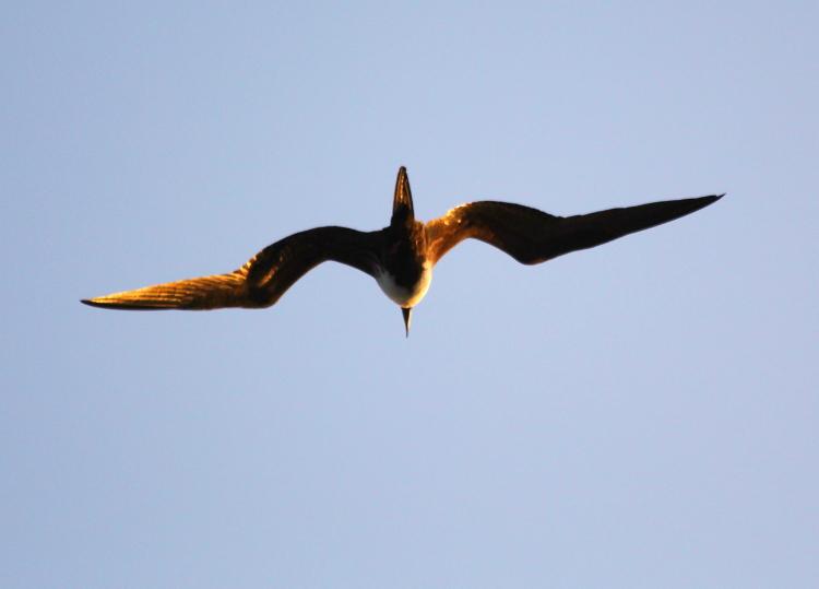 加勒比海上空的海鸥_图1-3