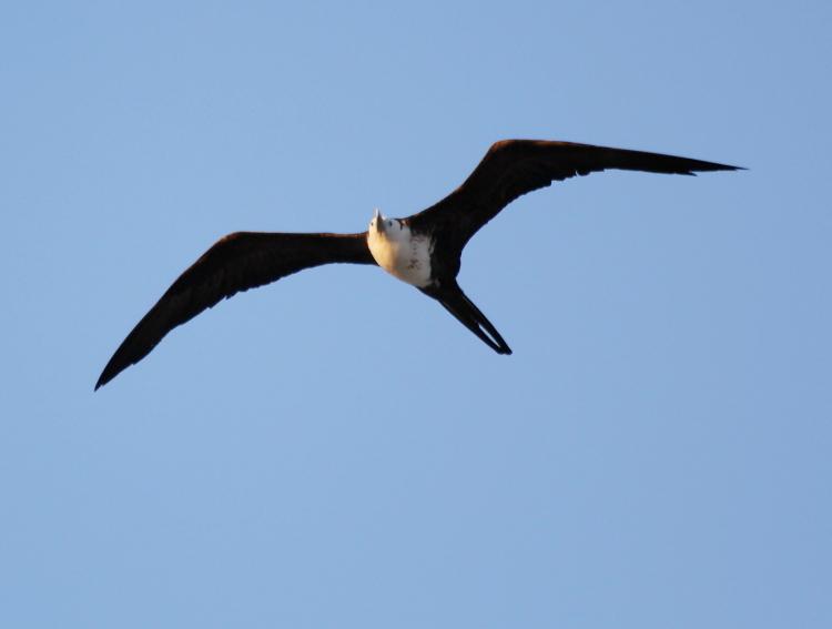 加勒比海上空的海鸥_图1-2