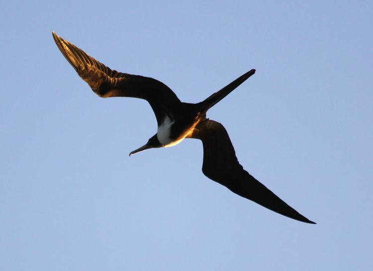 加勒比海上空的海鸥_图1-4