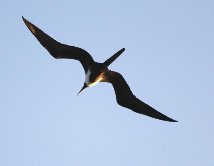 加勒比海上空的海鸥_图1-5