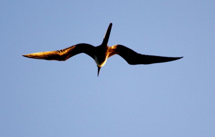 加勒比海上空的海鸥_图1-6
